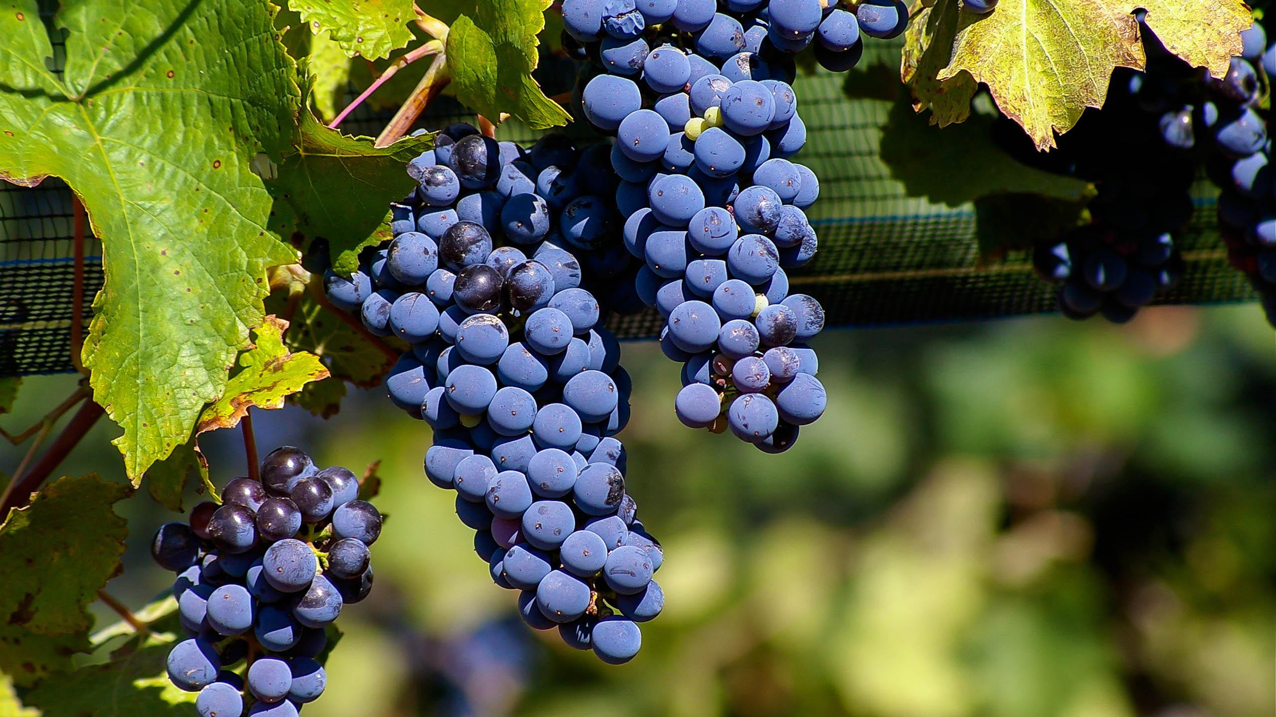 Malbec | Wine Guide | Virgin Wines